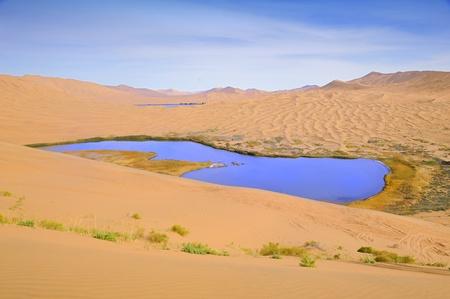 desert water: Dry plant in desert lake