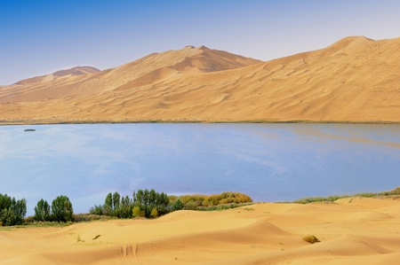 Dry plant in desert lake photo