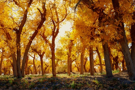 Herbstliche Landschaft am Morgen park