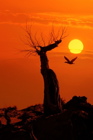 dead tree against sunlight over sky background in sunset with a flighting bird Stock Photo - 8341544