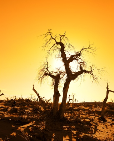 death tree against sunlight over sky background in sunset  Stock Photo - 8341554