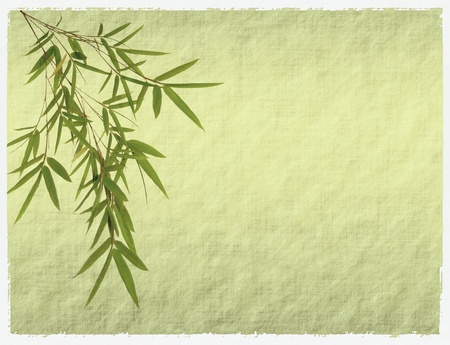 bamboo leaves: bamboo on old grunge antique paper texture