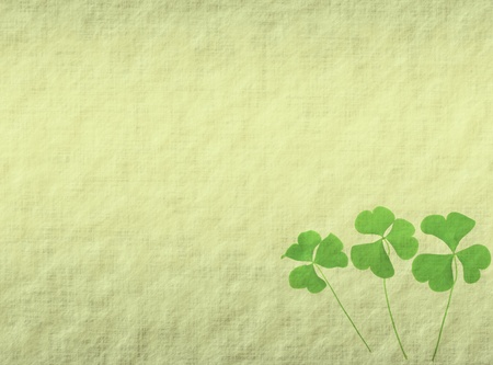 three leafed: trefoil on old grunge antique paper texture Stock Photo