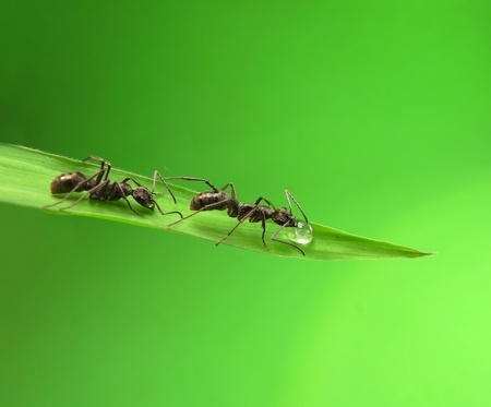 ants on a green grass photo