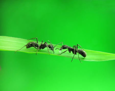 ants on green grass                                photo