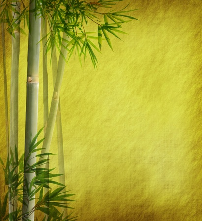Silhouette of branches of a bamboo on paper background Stock Photo - 8613789