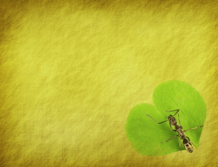 pismire: ant on old grunge antique paper texture