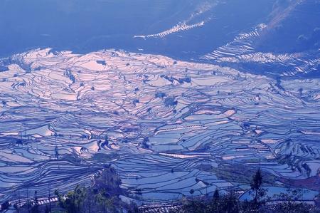 rice terraces of yuanyang in yunnan, china   photo