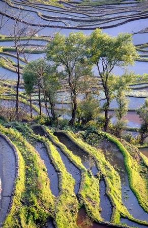 rice terraces of yuanyang in yunnan, china  Stock Photo - 8944359