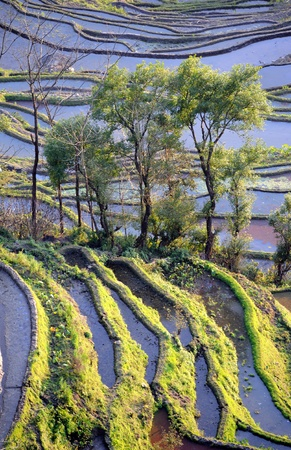 terracing: rice terraces of yuanyang in yunnan, china   Stock Photo
