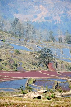 rice terraces of yuanyang in yunnan, china Stock Photo - 8944276