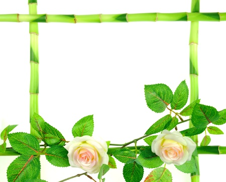 china rose: branch flower and green bamboo sticks on white background  Stock Photo