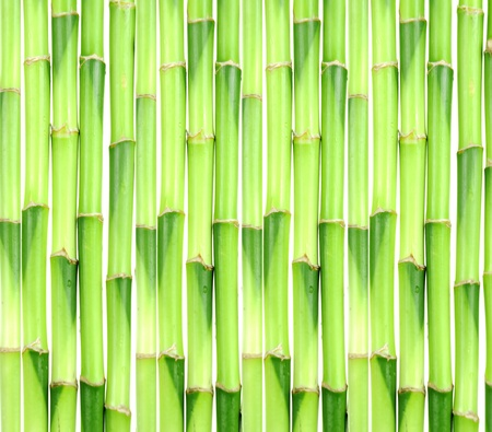 bamboo Stock Photo - 9301529