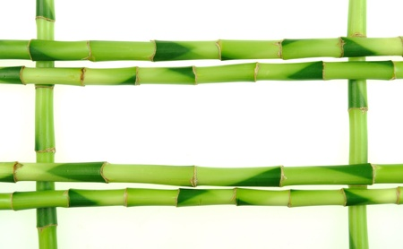 bamboo sticks on white background  photo