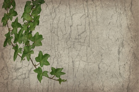 green cane on old grunge antique paper texture photo