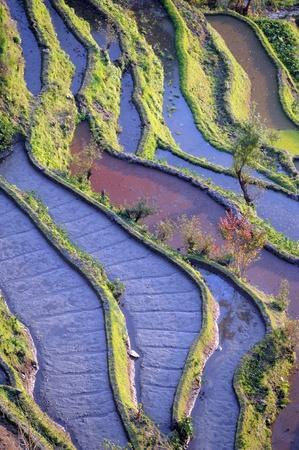 yunnan: rice terraces of yuanyang in yunnan, china   Stock Photo