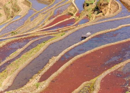 rice terraces of yuanyang in yunnan, china Stock Photo - 9369706