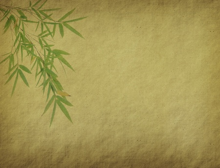 bamboo leaves on old grunge antique paper texture  photo