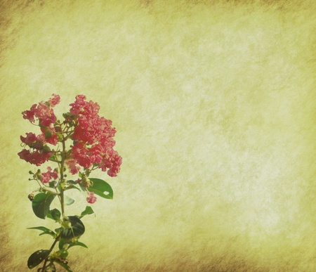 crepe myrtle flowers on old grunge antique paper texture Stock Photo - 9447918
