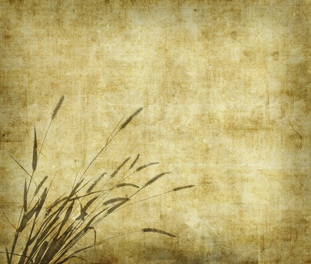 bulrushes: bulrushes on antique paper texture