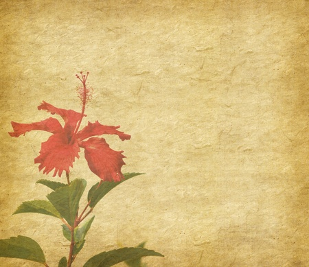 chinese hibisci Rosae-Sinensis Flower with set of abstract painted background Stock Photo - 9369732