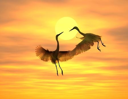 bird feet: sunset with a flighting bird