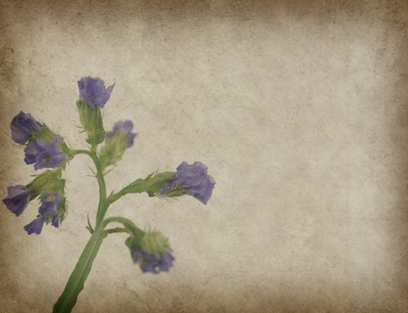 lavender on paper background photo
