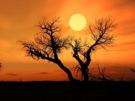夕焼けの空を背景に日光に対して死の木