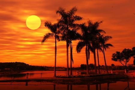 con la puesta de sol de Palm