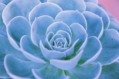 succulent: view of a cactus