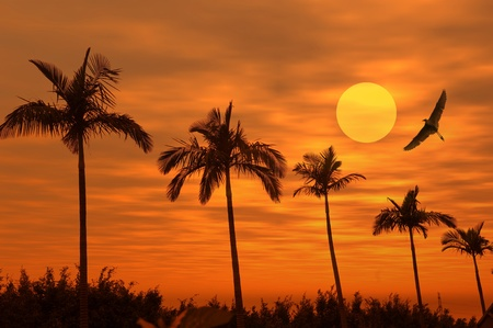 Palm tree silhouette on paradise sunset on the beach  photo