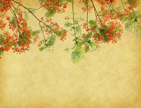 flamboyant: Peacock bloemen op boom met oude antieke vintage papier achtergrond
