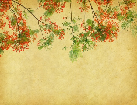 vintage wallpaper: Peacock flowers on tree with Old antique vintage paper background