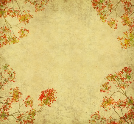 Peacock flowers on tree with Old antique vintage paper background  版權商用圖片