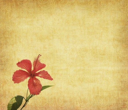 chinese hibisci Rosae-Sinensis Flower with set of abstract painted background photo