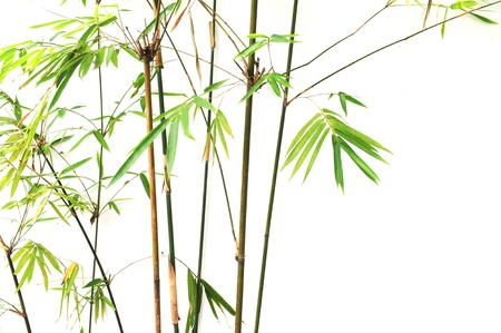 japanese garden: bamboo background  Stock Photo