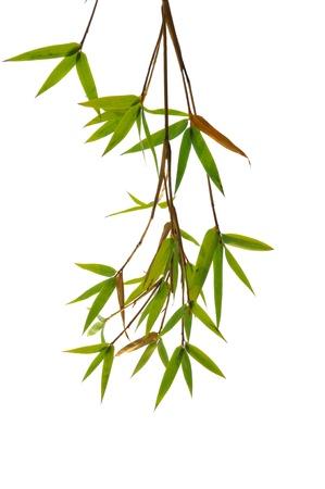 wooden stick: bamboo background  Stock Photo