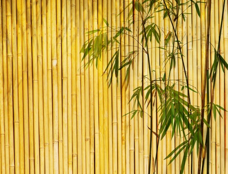 Light Golden bamboo Background great for any project. frame of bamboo-leaves background. Stock Photo - 9773388