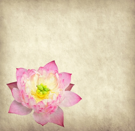 lotus with set of abstract painted background photo