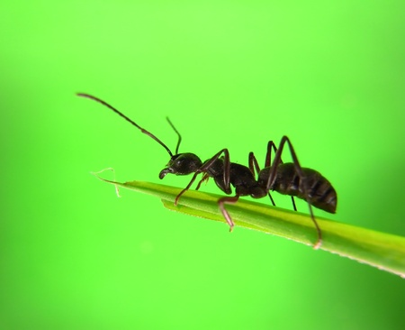 ants on a green grass                                      Stock Photo - 9773339