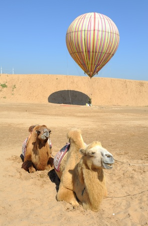 balloon with camel in desert photo