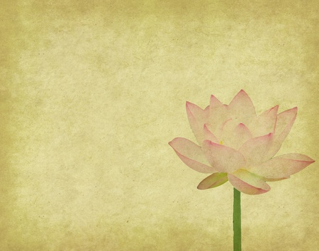 lotus background: lotus and bamboo on Old antique vintage paper background Stock Photo