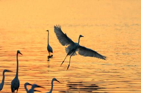 pies bonitos: Garcetas jugar en el agua