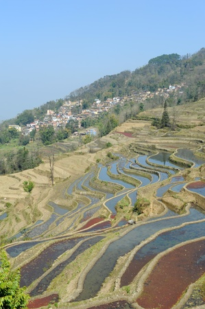 yuanyang: rice terraces of yuanyang in yunnan, china