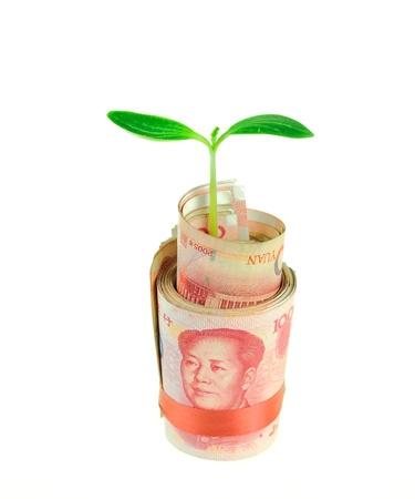 harmless: Cash of China money RMB  with green plant  Stock Photo