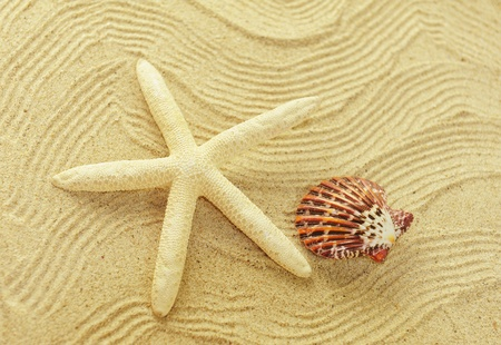 starfish and shells with frame on the beach, vacation memories Stock Photo - 10413341