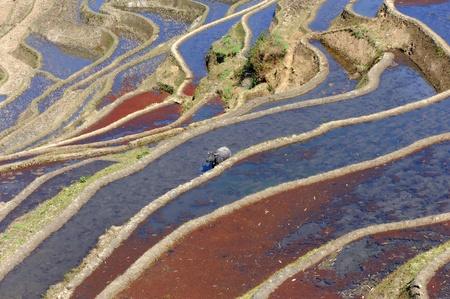 yuanyang: rice terraces of yuanyang in yunnan, china  Stock Photo