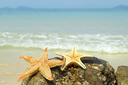 starfish on reef seacoast  photo