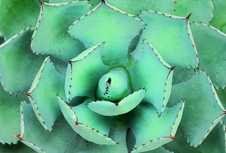 Top view of a cactus photo