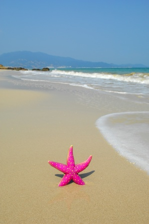 starfish on reef seacoast   photo